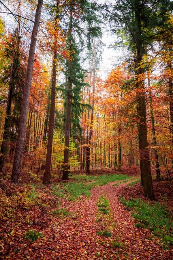 Forêt d'or et brune pendant l'automne en Pologne image stock