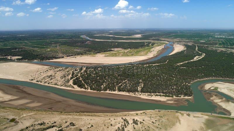 Forêt d'euphratica de Populus en bassin du fleuve Tarim images libres de droits
