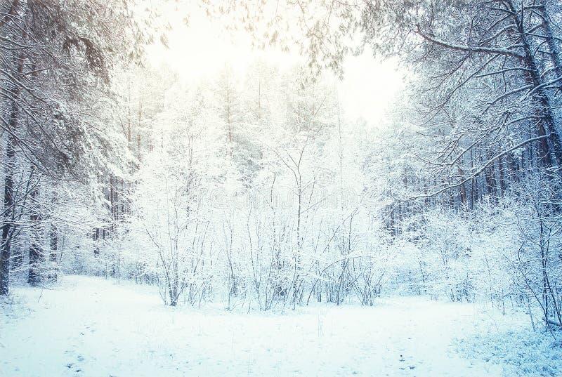 Forêt d'hiver images libres de droits