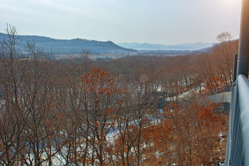 Forêt d'hiver avec de hauts ponts pour le passage des personnes, parc avec des animaux et ponts pour des personnes photo stock