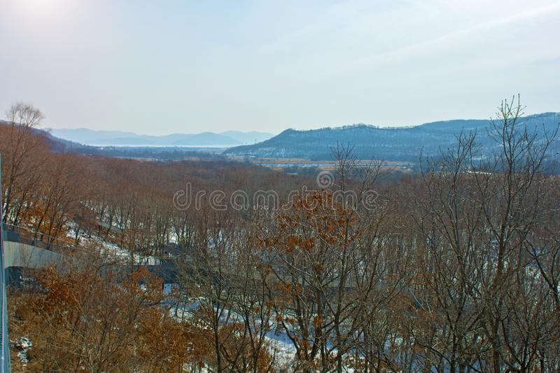 Forêt d'hiver avec de hauts ponts pour le passage des personnes, parc avec des animaux et ponts pour des personnes photos stock