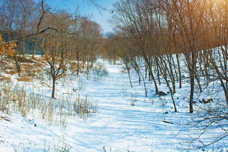 Forêt d'hiver avec de hauts ponts pour le passage des personnes, parc avec des animaux et ponts pour des personnes photographie stock