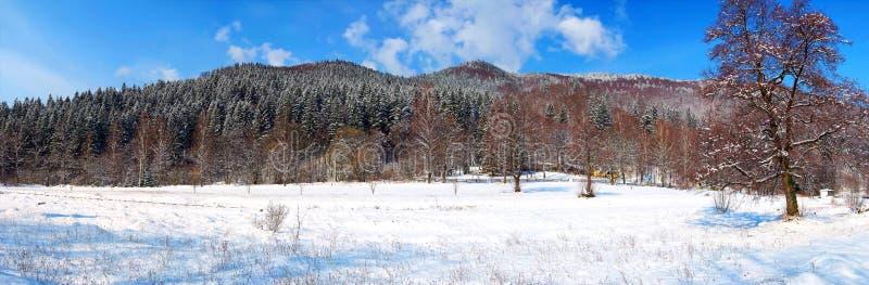 Forêt d'hiver avec la neige blanche photo libre de droits