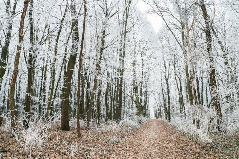 Forêt d'hiver avec le chemin de terre photographie stock