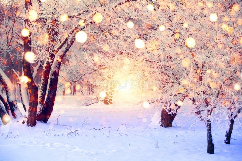 Forêt d'hiver avec les flocons de neige colorés La neige a couvert des arbres de lumières de Noël Fond du pays des merveilles de  photo libre de droits