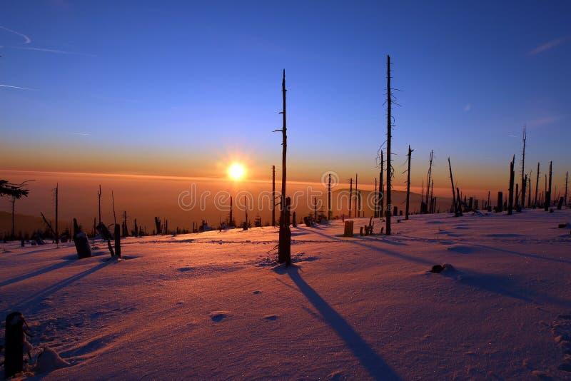 Forêt d'hiver détruite par des scarabées d'écorce pendant le coucher du soleil image stock