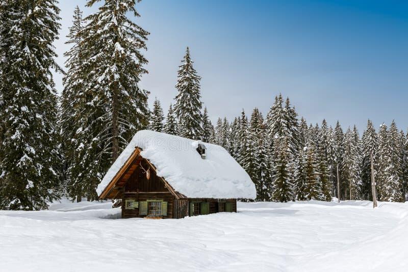 Forêt d'hiver dans les Alpes images stock