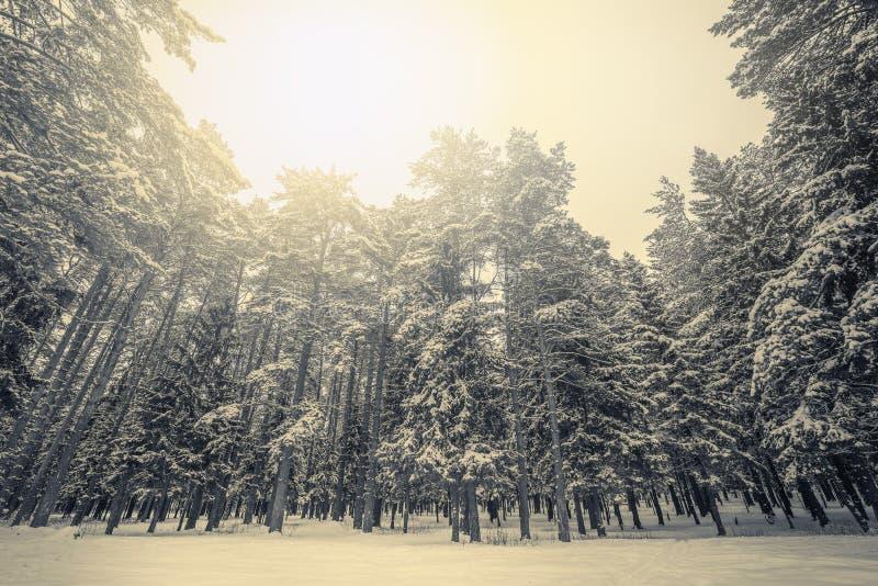 Forêt d'hiver de ¡ de Ð vieille images stock
