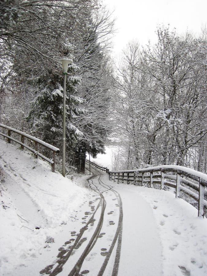Forêt d'hiver de Milou et traînées larges moletées Matin de Noël images stock