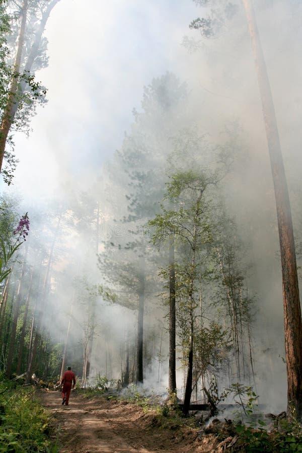 Forêt d'incendie photo libre de droits