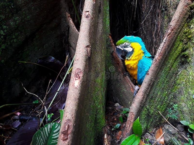 Forêt d'oiseau photographie stock