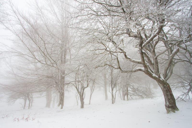 Forêt d'Urbasa image libre de droits