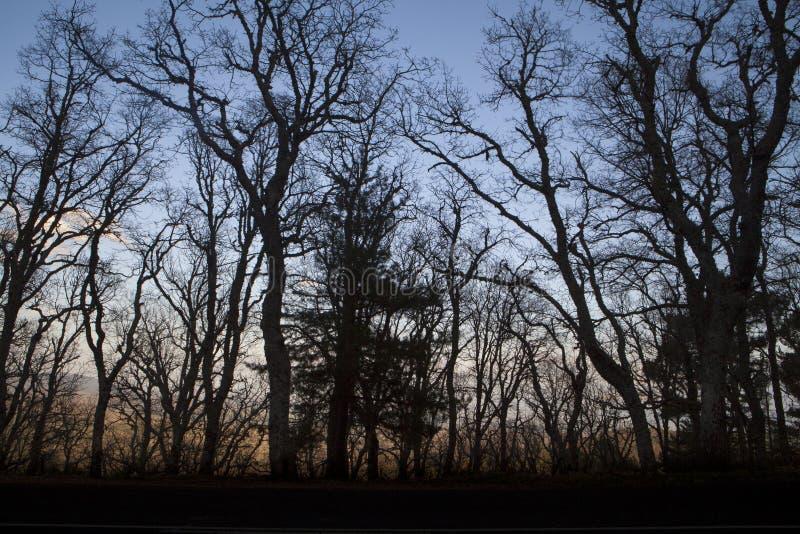 "Forêt dans ""Peña de Francia ""à Salamanque images libres de droits"