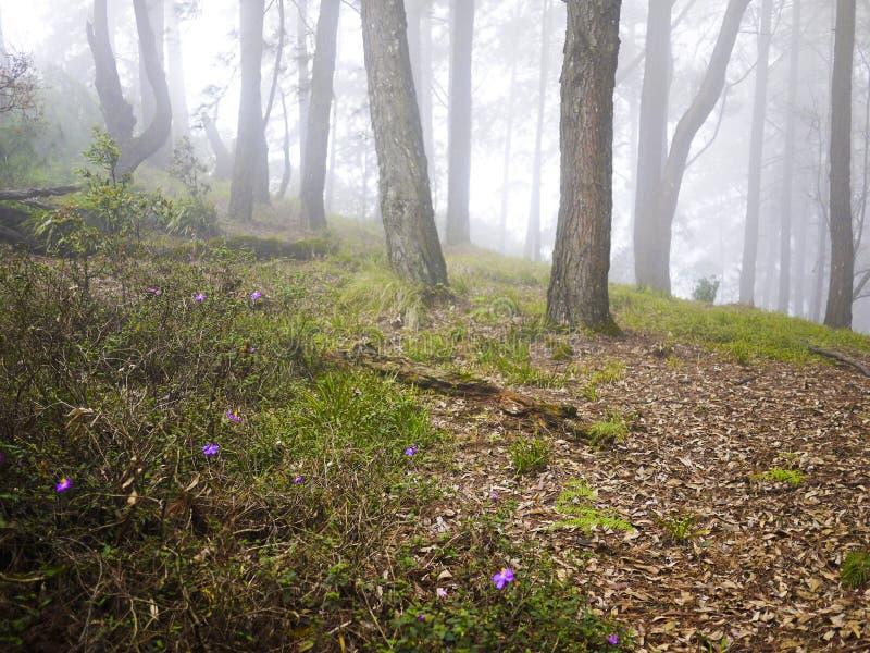 Forêt dans Haputale, Sri Lanka image stock