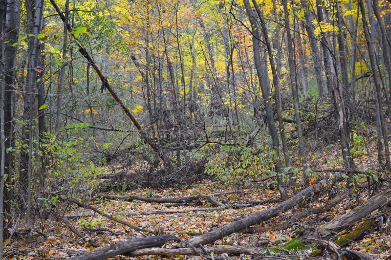 Forêt dans l'automne avec la chute de rondins photo stock