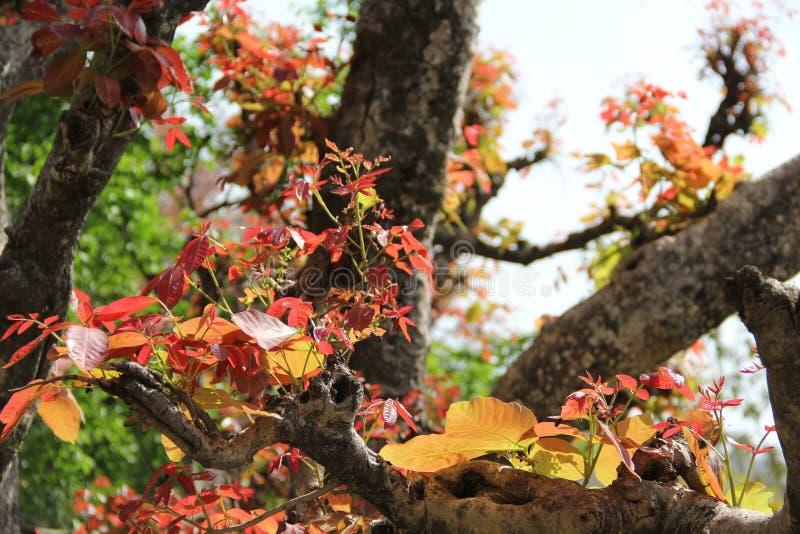 Forêt dans l'Inde photos stock