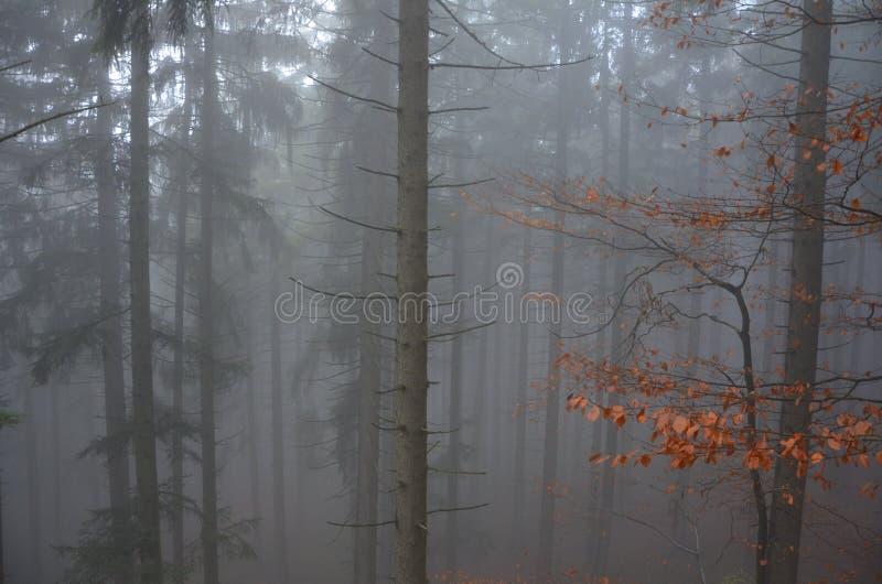 Forêt dans le brouillard d'automne photos libres de droits