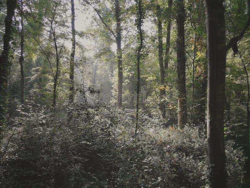 Forêt dans le Pula, Croatie photographie stock