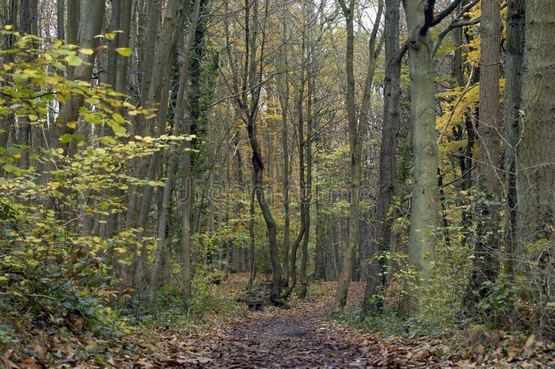 Forêt dans les Frances photographie stock