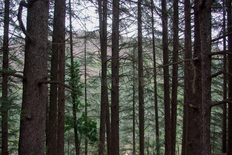 Forêt dans les Frances photos libres de droits