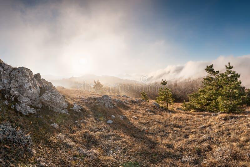 Forêt dans les montagnes images stock