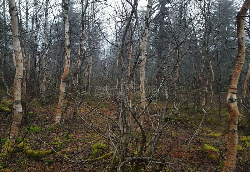 Forêt dansante sur les pentes des montagnes de l'Oural image stock