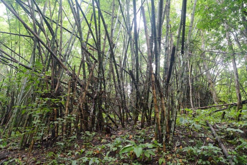 Forêt de bambou de dégradation photographie stock