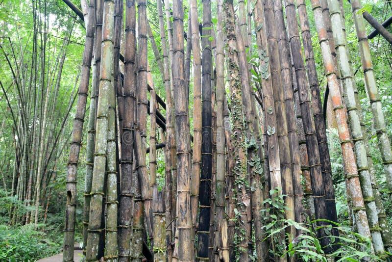 Forêt de bambou de dégradation image libre de droits