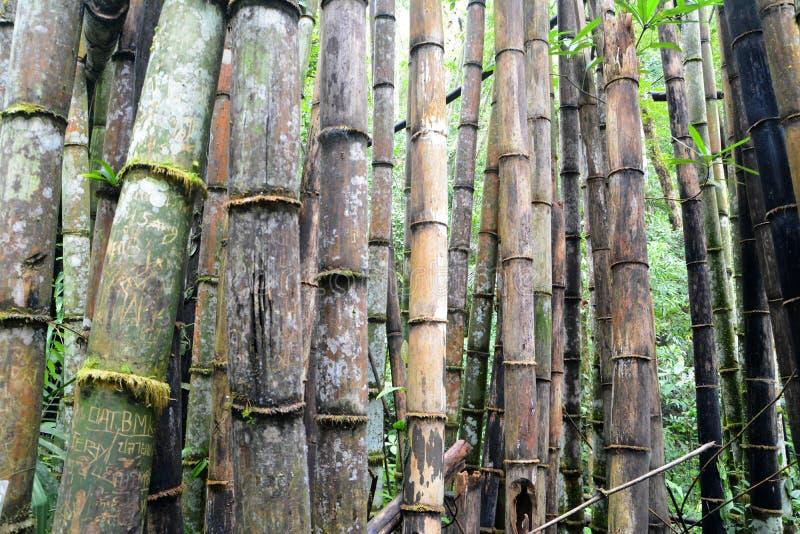 Forêt de bambou de dégradation photo libre de droits