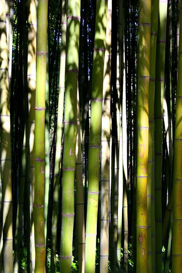 Forêt de bambous photographie stock