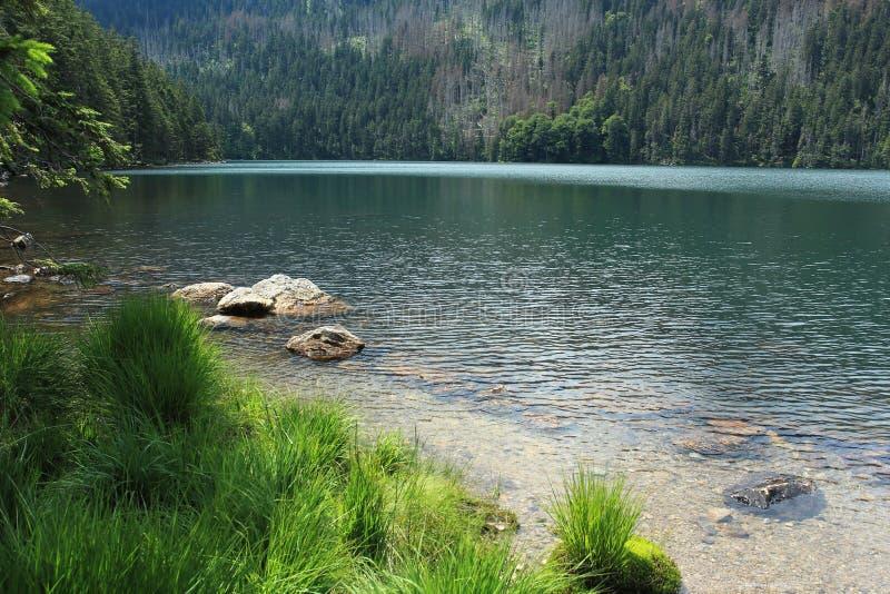 Download Forêt De Bohème - Cerne Jezero Image stock - Image du course, arbre: 76089003