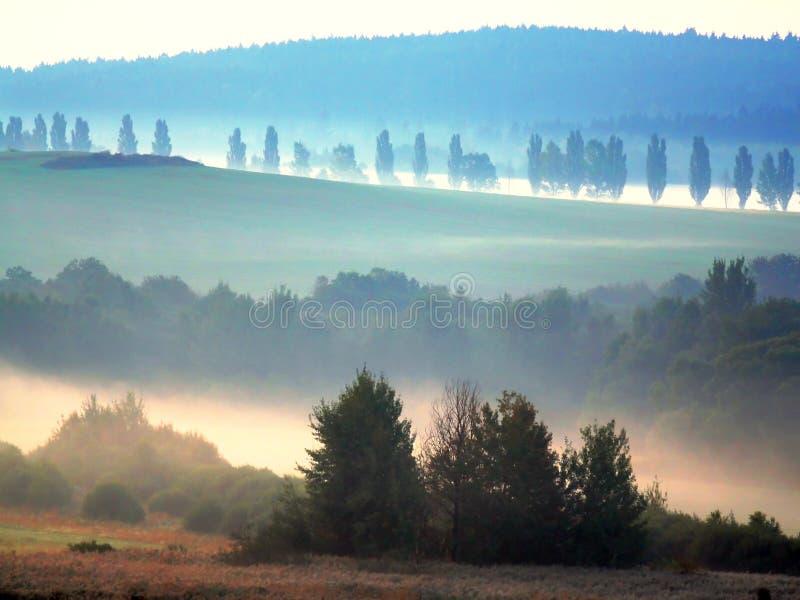 Forêt de bohémien de brouillard de matin images libres de droits