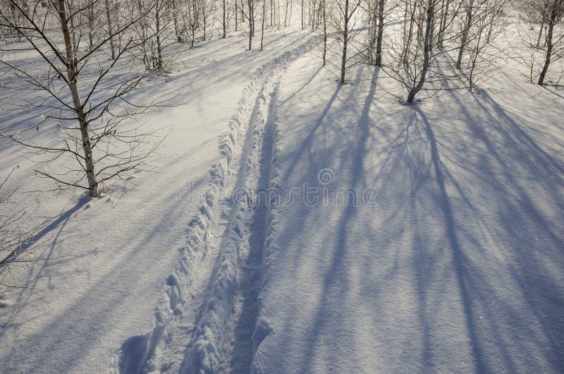 Forêt de bouleau d'hiver, traces des skis dans la neige profonde photo stock