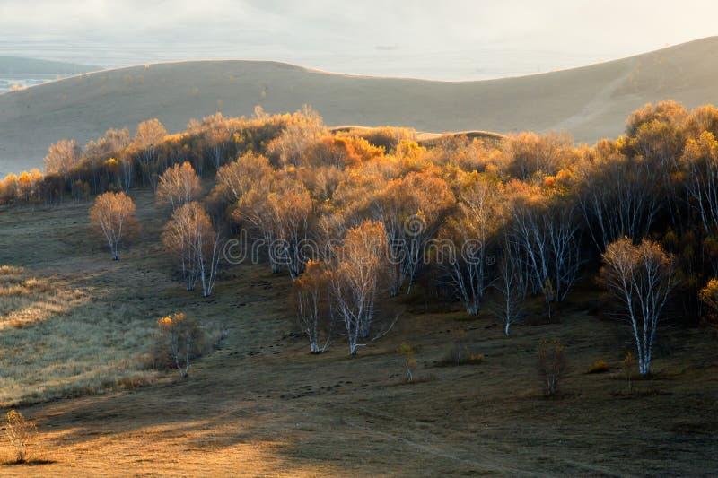 Forêt de bouleau en automne photographie stock libre de droits