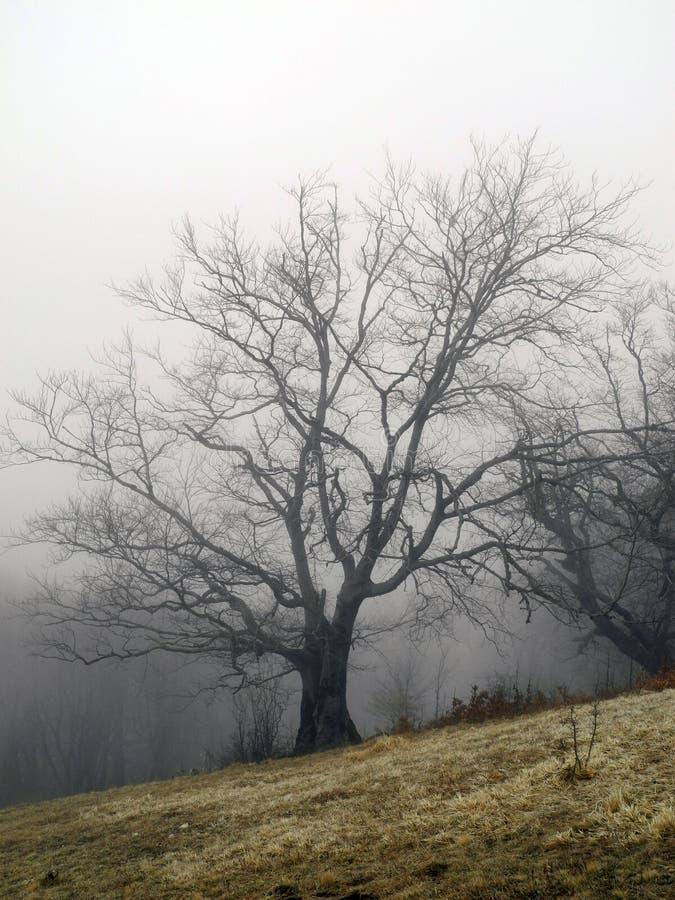 forêt de brouillard au printemps photo libre de droits