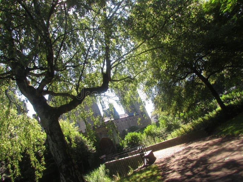 Forêt de Cardiff photographie stock libre de droits