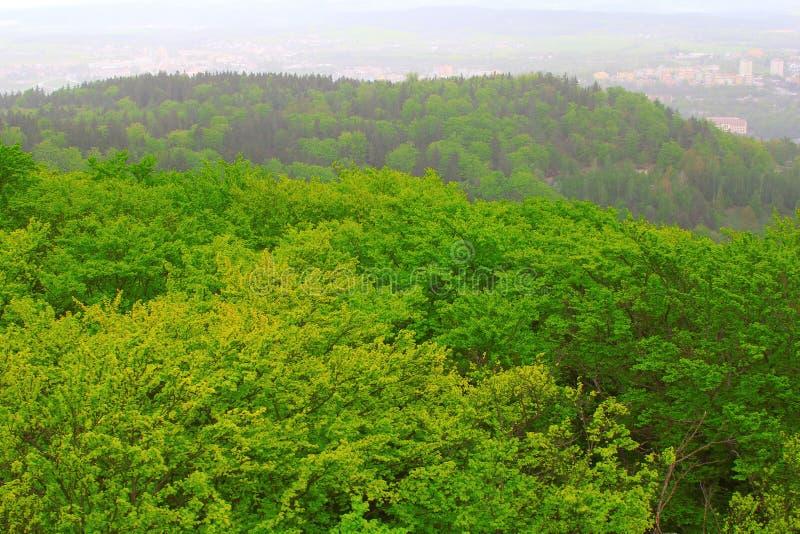 Forêt de Carlsbad photo libre de droits