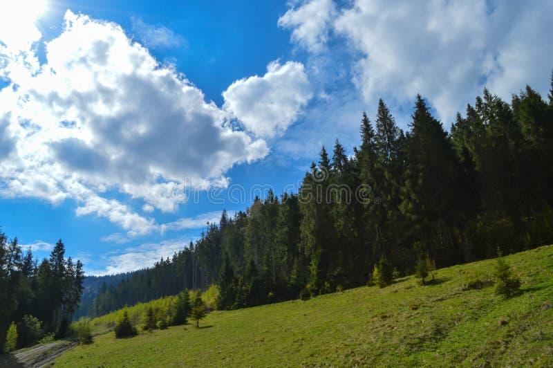 Forêt de Carpathiens en mai photographie stock libre de droits