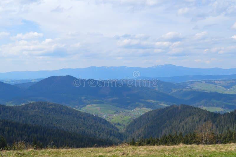 Forêt de Carpathiens en mai photos stock