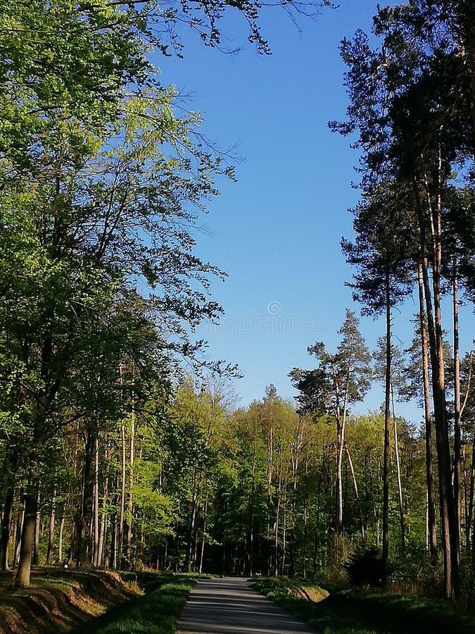 Forêt de ciel en bois de nature photos libres de droits