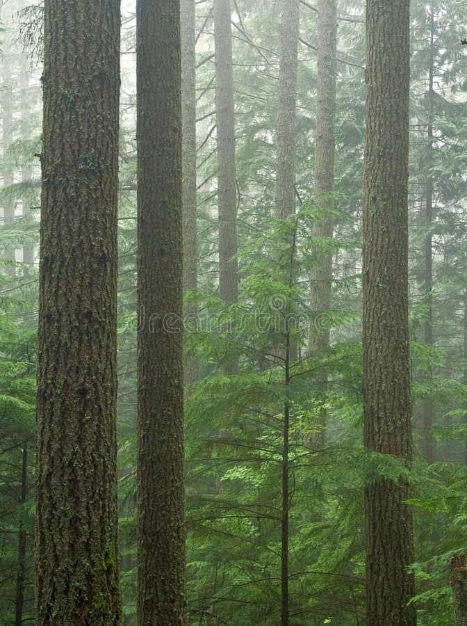 Forêt de cigûe photographie stock