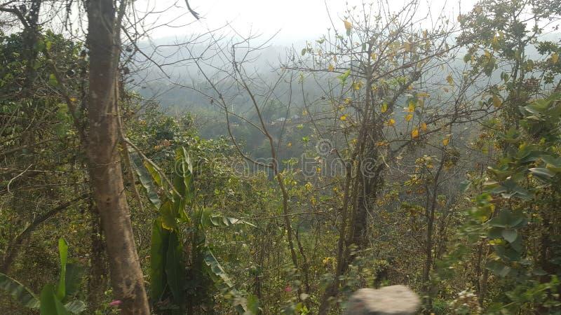 Forêt de colline ! Photographie sauvage de nature image libre de droits