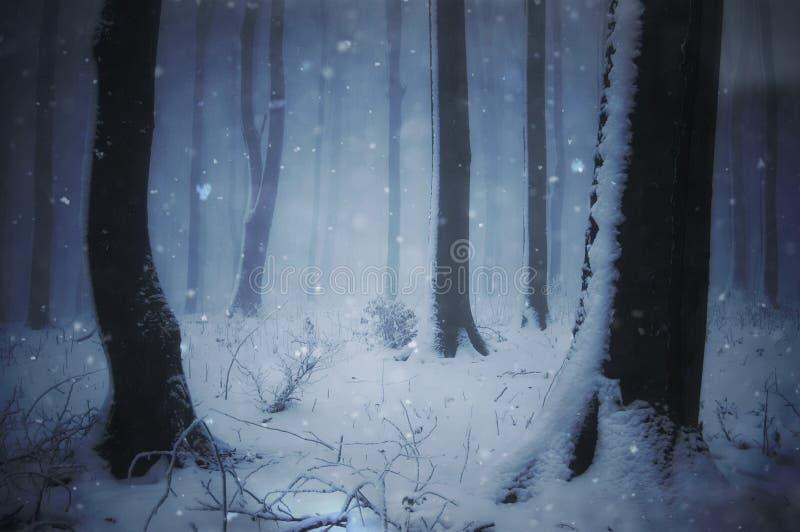 Forêt de conte de fées avec la chute et le brouillard de neige photos libres de droits