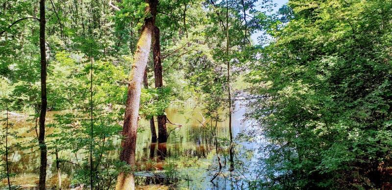 Forêt de Corbeanca photos stock