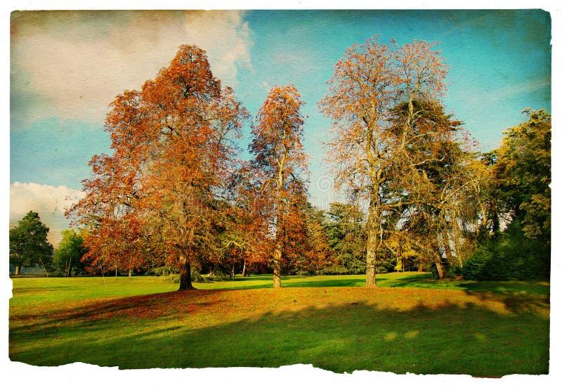 Forêt de cru photographie stock libre de droits