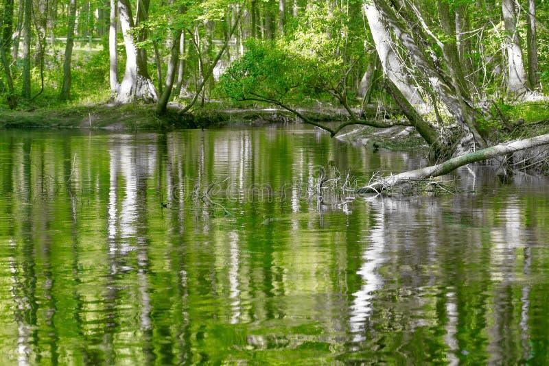 Forêt de Cypress et marais de parc national de Congaree dans Caro du sud photos stock