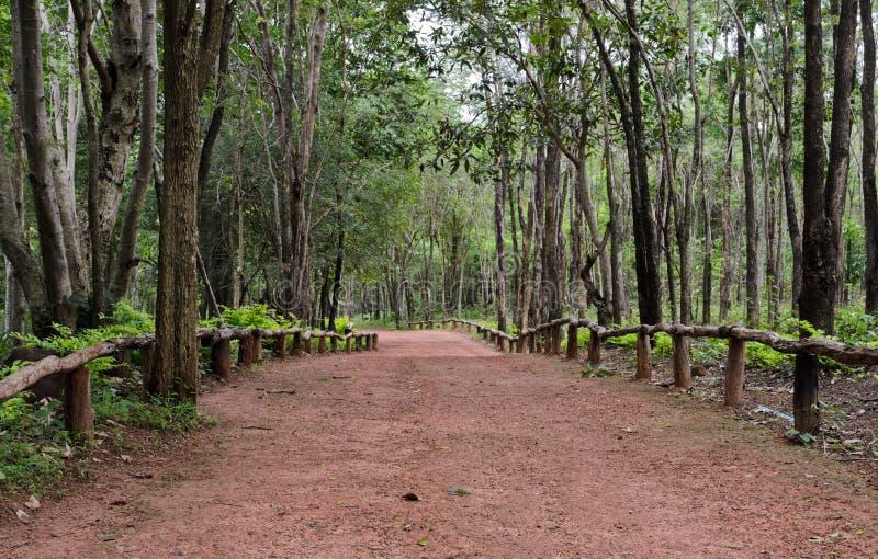 Forêt de Dipterocarp, Thaïlande photographie stock libre de droits