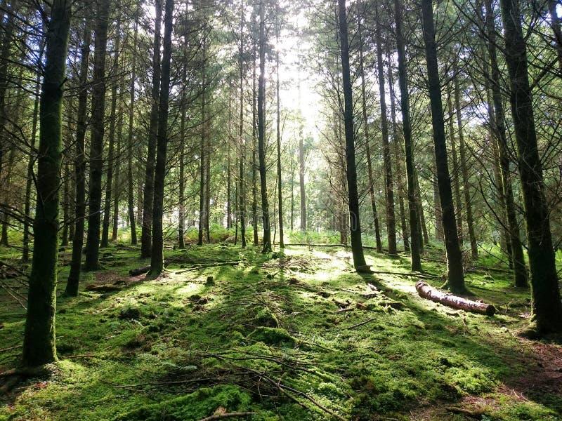 Forêt de doyen photographie stock
