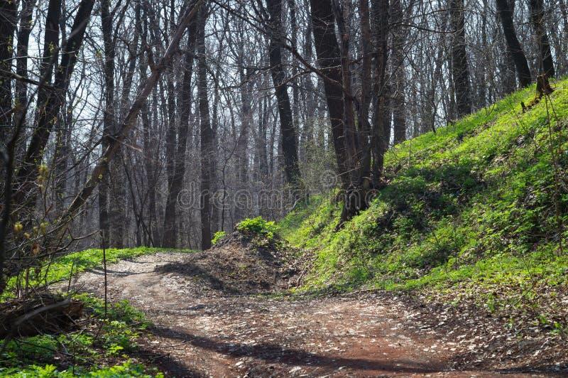 Forêt de enroulement scénique de marais de chemin de terre au printemps dans le soleil de matin image libre de droits