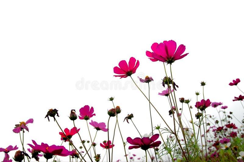 Forêt de fleurs images libres de droits